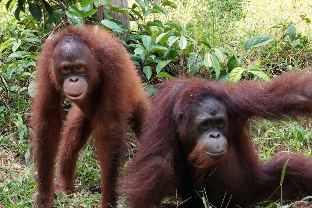 Terra (links) en Ribang in het oefenbos in Tembak | Foto: SOC