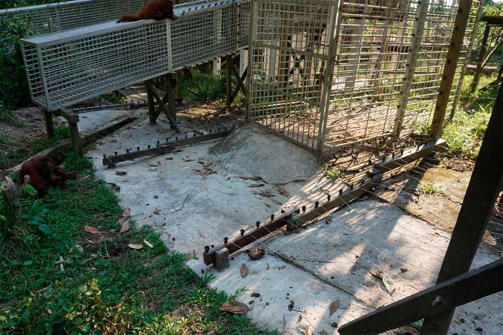 Het schrikdraad is nu verder doorgetrokken over de grond, zodat de orang-oetans niet meer bij het hek kunnen komen. | Foto: SOC