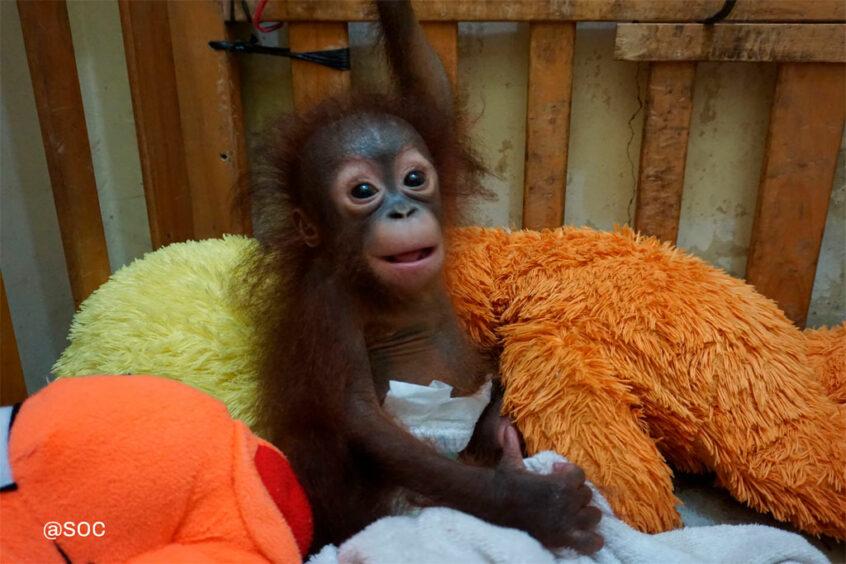 Julia in de speciale opvangkamer voor baby's in het SOC | Foto: SOC