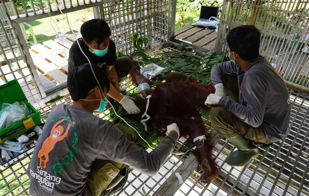 Penai wordt onderzocht door artsen van het SOC | Foto: SOC