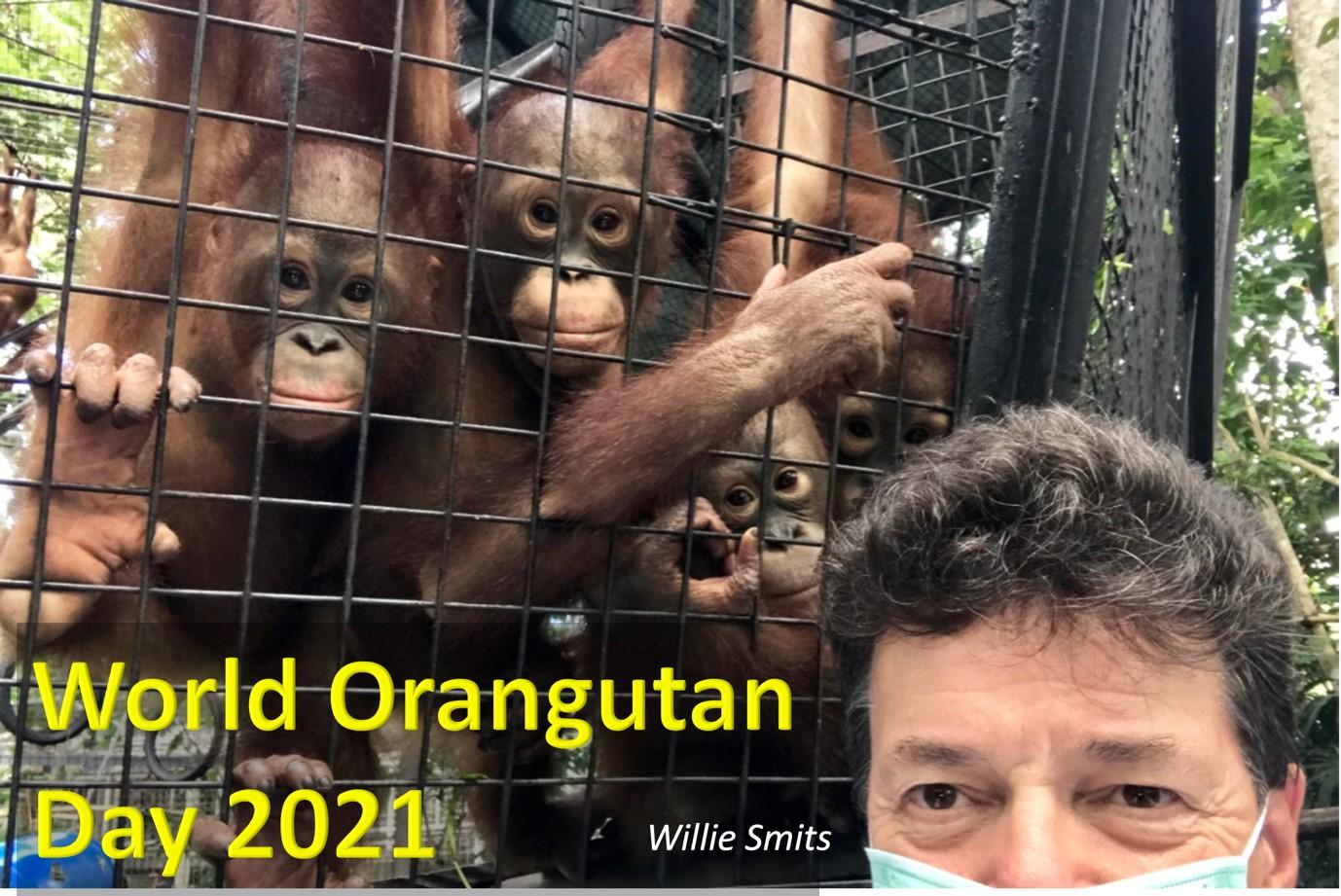 """Featured image for """"Gastblog Willie Smits: World Orangutan Day 2021"""""""